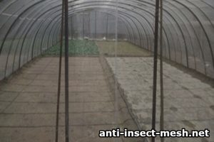 Greenhouse with anti aphids mesh